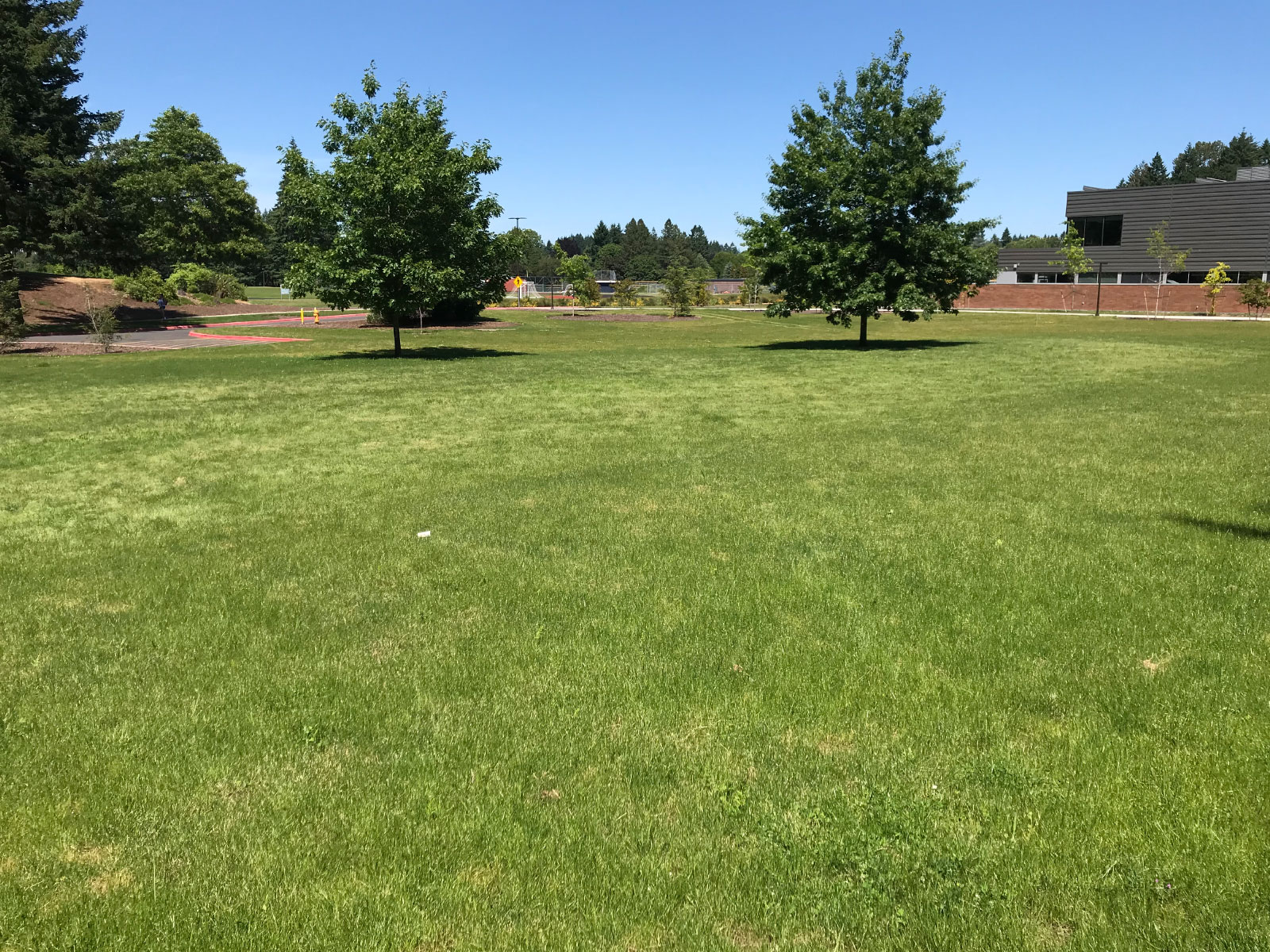 An open field of green grass next to the Industrial Technology Center with lush trees at the Oregon City campus